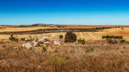 Broad pastures