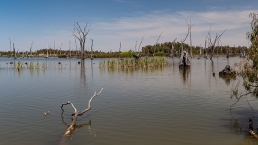 Murray River near Yarrawonga