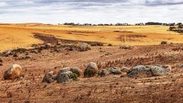 Rocky pastures #1